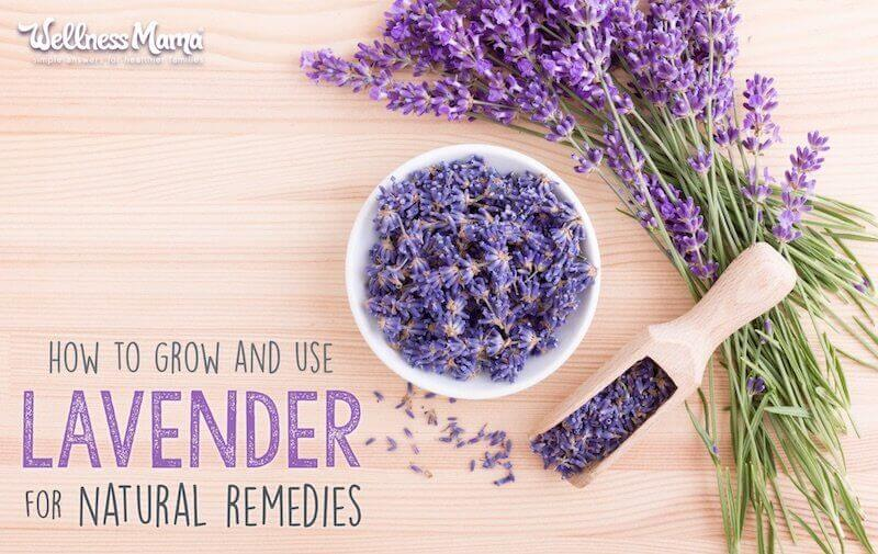How to Use Lavender (Grow it, Make Natural Remedies & More)